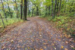 Wide leaf covered path through an autum forest Royalty Free Stock Image