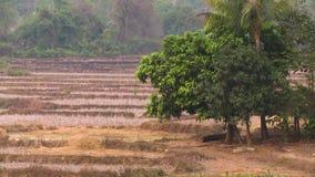 Terraced dry farmlands, forest scene, Myanmar