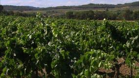 Spanish Vineyard Landscape, Codorniu Winery, Spain stock video footage
