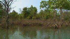 Scattered Mangrove shrubs, Kangy River, Myanmar