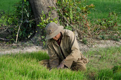 Wide of male Rice Field Worker Harvesting Rice in Southeast Asia Stock Photo