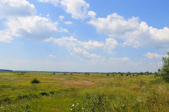 Wide meadow and blue sky. Summer landscape Royalty Free Stock Photography
