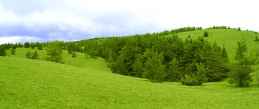 Wide Meadow and Fir Forest Royalty Free Stock Photography