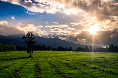 Wide meadow in the twilight. Royalty Free Stock Photo