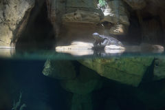 Wide open crocodile mouth portrait Stock Photo