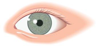 Wide open eye. Green, wide open eye illustration Stock Photos