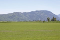 Wide Open Farmland in the Fraser Valley Stock Images