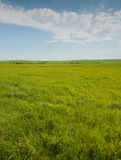 Wide open prairie with lush green grass stock photo