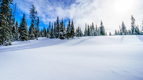 Wide open snowfields, snow covered trees and deep snow pack in the high alpine Royalty Free Stock Images