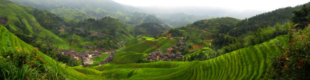 Wide Panorama of Chinese Rice Terraces Royalty Free Stock Photos