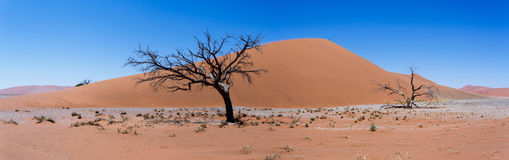 Wide panorama Dune 45 in sossusvlei Namibia Royalty Free Stock Photography