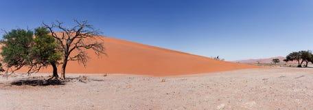 Wide panorama Dune 45 in sossusvlei Namibia Royalty Free Stock Photo