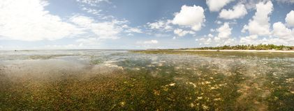 Wide panorama of empty shore, low water on sand with sea kelp an stock image
