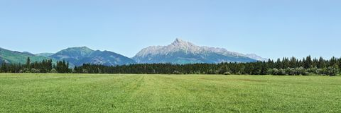 Wide panorama of green meadow with small forest and mount Krivan peak -Slovak symbol - in distance, clear sky above.  royalty free stock image