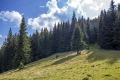 Wide panorama of green mountain hills in sunny clear weather. Ca Royalty Free Stock Images