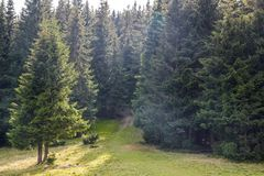 Wide panorama of green mountain hills in sunny clear weather. Ca Royalty Free Stock Photography