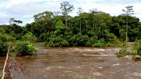Wide panorama of tropical river in the African jungle. Tropical river floods the African jungle, close-up, Equatorial Guinea. Rapid River in tropical jungle stock video footage