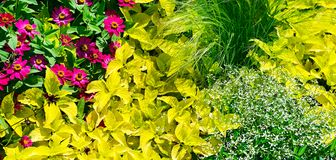 Wide panoramic picture spring flowers stock image