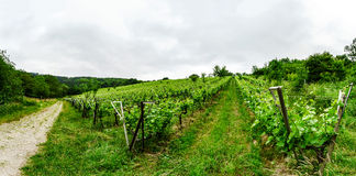 Wide panoramic view to Alsacevineyards, France Royalty Free Stock Image
