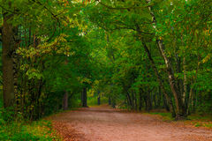 Wide path in the autumn forest, Royalty Free Stock Image