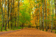 Wide path in autumn park Royalty Free Stock Images