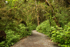 Wide path leading into rainforest in Tongass National Forest, Alaska. Wide, accessible earthen path leading into lush and green rainforest in Tongass National Royalty Free Stock Photo