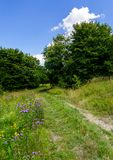 Wide path through meadow in to the forest. Beautiful summer nature scenery. blue sky with fluffy cloud Stock Image