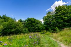 Wide path through meadow in to the forest. Beautiful summer nature scenery. blue sky with fluffy cloud Stock Photo