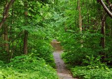 Dirt road in an oak grove in summer stock images