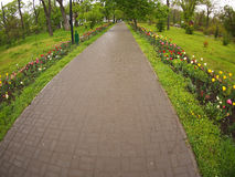 The wide path in the park of the tiles Stock Photography