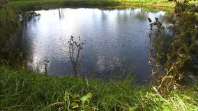 A wide pond in the middle of a field. A steady shot of a pond in the middle of a field stock video
