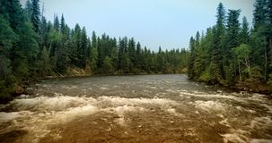 Wide river in forest royalty free stock image