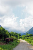 Highland road. Wide road at abkhazian highlands royalty free stock photo