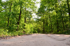 Wide road in the forest Stock Photos
