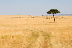 Wide Savannah in Masai Mara National Reserve. Kenya Stock Image