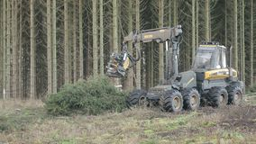 Wide shoot of forestry harvester cutting trees stock video