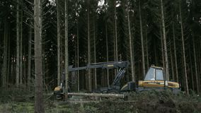 Wide shoot of forestry harvester working. In Danish forest stock footage