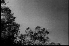 Wide shot of bat flying over trees stock footage