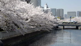 Wide shot of cherry blossom along a river in Tokyo Stock Photography