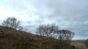 A row of leafless bushes on a hillside. Wide shot of a coarse, brown hillside with a row of stiff, leafless bushes in the foreground stock video footage