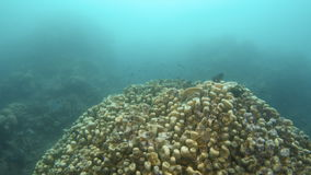 Coral reef with grouped fish underwater. A wide shot of a coral reef with fishes grouped making a rainbow pattern stock video footage
