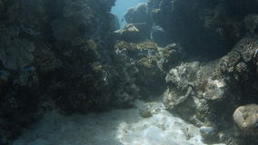 Seabed and coral reef shot. A wide shot of a coral reef with fishes and seabed sands stock video footage