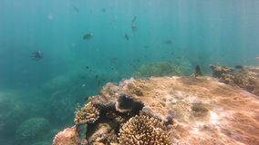 Underwater coral reef. A wide shot of coral reef underwater with sun rays on seabed stock video