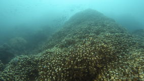 A wide shot of a coral reef. With fishes grouped together. Tracking shot forward stock video footage
