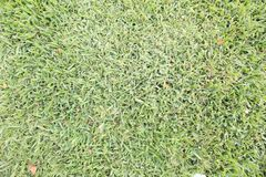 Wide Shot of Freshly Mowed Green Grass Lawn Background stock images