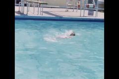 Wide shot of man doing the backstroke in pool stock footage