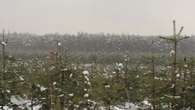 Wide shot of new year trees (fir-tree) in snow. Stock footage stock video