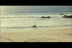 Wide shot or person horseback riding on beach stock footage