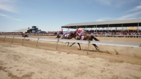 Horse racing on field. A wide shot of racing field and horse racing. Camera pans to the left to follow the race stock footage