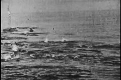 Wide shot of school of dolphin in the ocean stock video footage